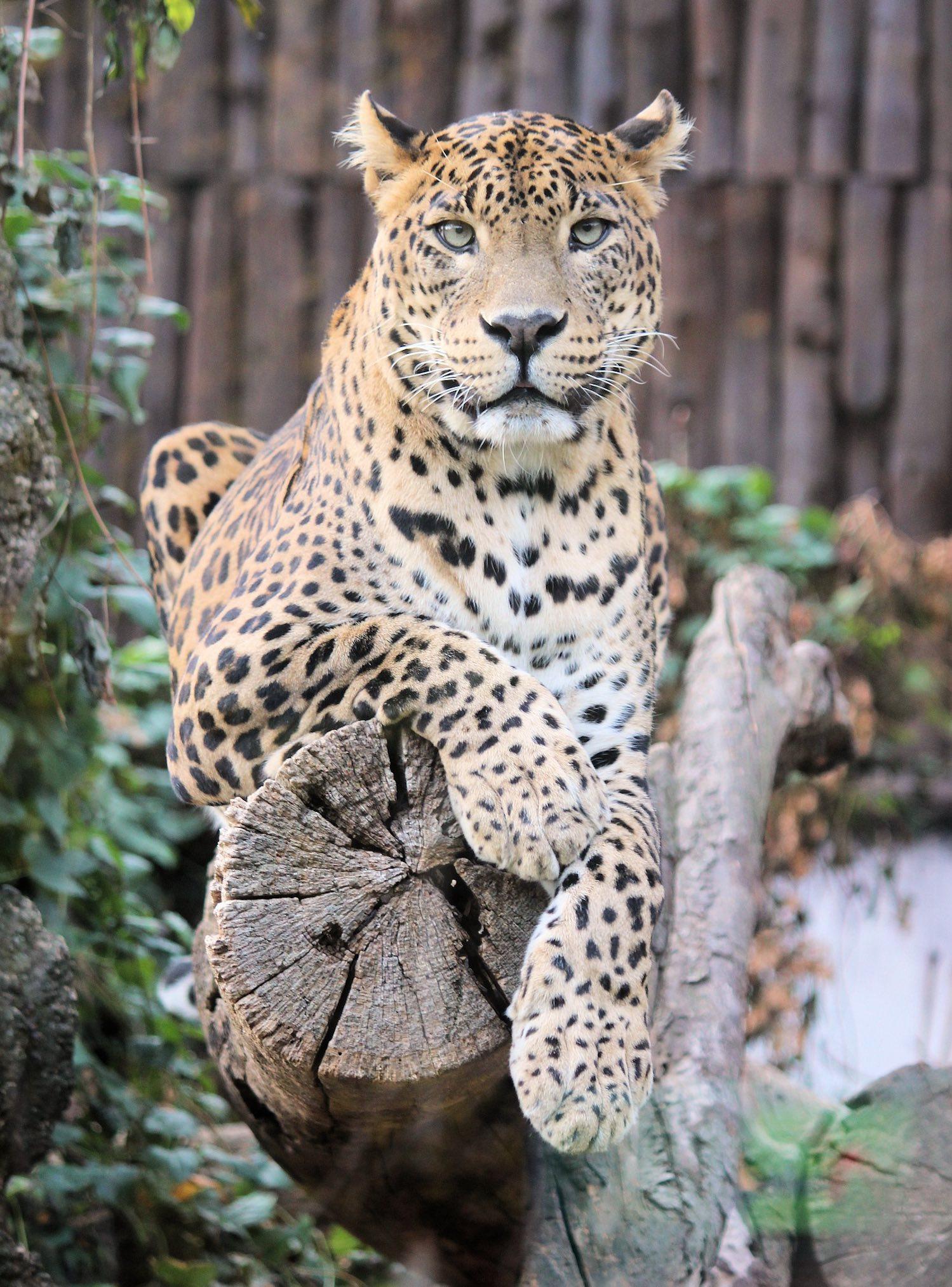 tiger king - recenzja